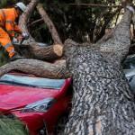 Maltempo: alberi caduti e forte vento, 200 interventi a Roma